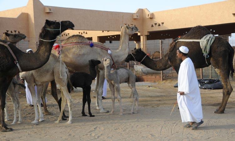 Al Ain City Tour from Abu Dhabi