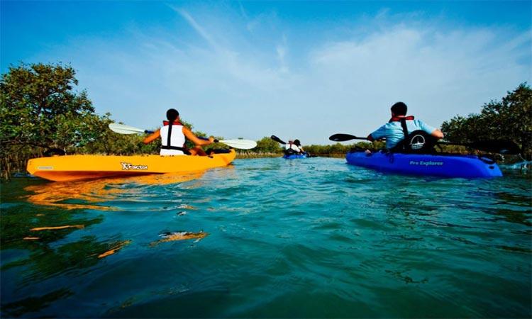 Mangrove Kayaking Abu Dhabi